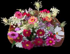 Bestel<br> CSA bloemen<br> boeketten